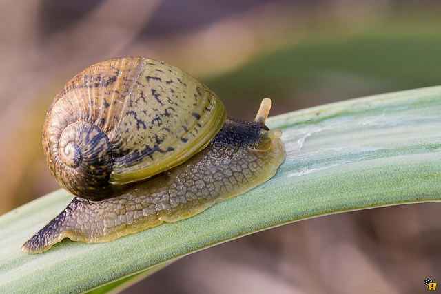 snail-speed